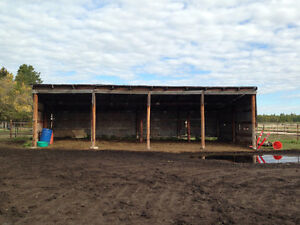 Horse Boarding Available South West of Edmonton Edmonton Edmonton Area image 10