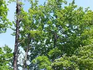 Lumbersmith Tree Removal Services Inc Kitchener / Waterloo Kitchener Area image 4