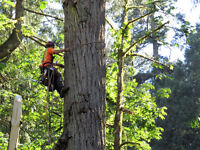 Tree Service Arborist/Climber/Grounds Person