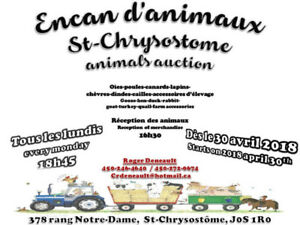 Encan d'animaux St-Chrysostome - retour 30 avril