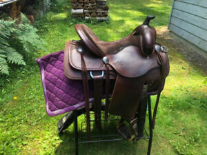 Custom Saddle | Adopt or Rehome Pets in British Columbia