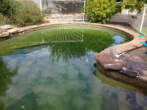 AdelaidePool Guys Green Pool Recovery /Complete Pool Care Athelstone Campbelltown Area Preview
