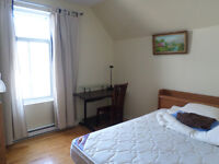 chambre disponible immediatement