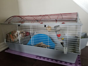 1 year old holland lop bunny available for adoption