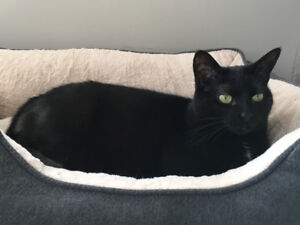 Lovable cat in need of new home