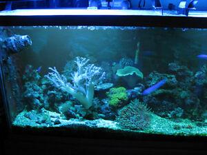 125 gal. saltwater Aquarium complete