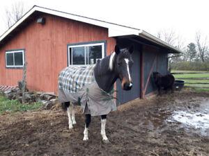 Paint Horse for Partboard