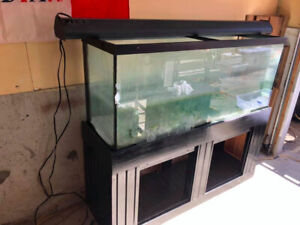 116 Gallon Aquarium - ($325) - P/u in Meadowvale