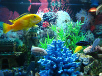 Lots of Cichlids & Other Tropical Fish