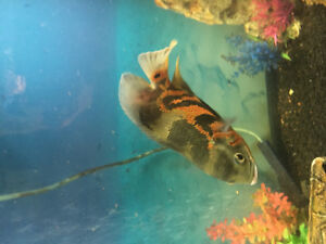 Fish for rehoming
