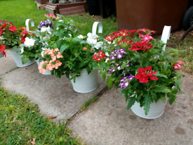 4 beautiful fence planters with plants