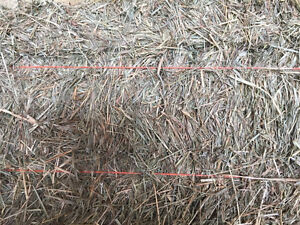Horse Hay - Small Squares