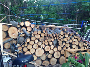 LUMBER FOR SALE- FRESHLY CHOPPED
