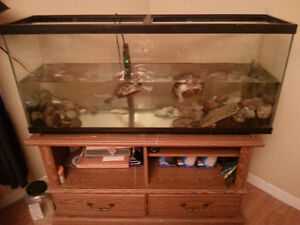2 large turtles and 80 gallon tank with feeding tank aswell!