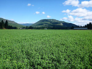 1st cut Alfalfa/ Grass Hay for sale