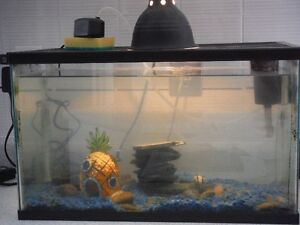 10 gallon starter tank for sale - $80 or b.o.