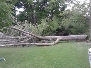 Tree cutting & by TWO GUYS TREE SERVICE & LANDSCAPING