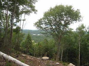 Terrain Chertsey Lanaudière vue accès au lac