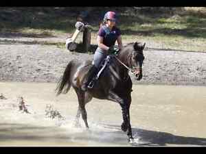 Candy ~ 16 hh Thoroughbred Mare