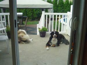 L'Auberge des chiens