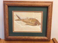 Fossil fish in oak frame
