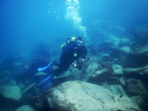 OVAS April Meet up - Swimming with Cichlids in Malawi