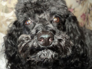 Small Pet Sitting available in the Saint John/Rothesay Area