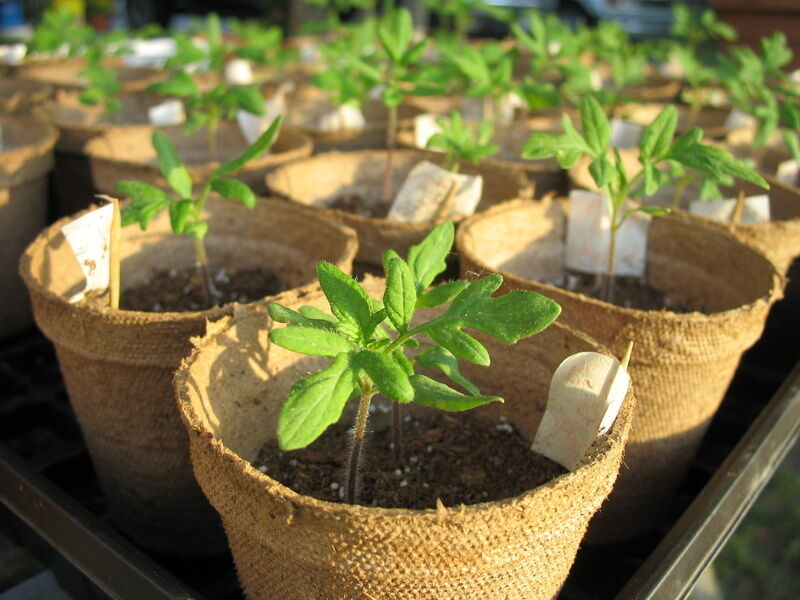 How to Start a Plug Plant Garden