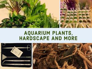Order Live Aquarium Plants