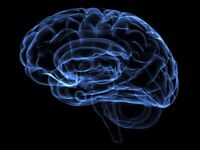 Research Participants Wanted for Brain Imaging Study