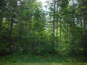 Almost 5 Acre Treed Lot on North Shore