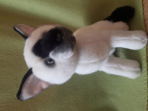 """""""Russ"""" siamese cat with tags"""