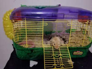 Gerbil and cage