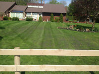 LAWN CUTTING FROM $20! WOW
