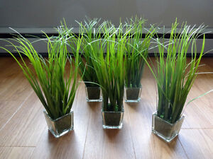 Decorative Grass Plants in Glass Moss Pots