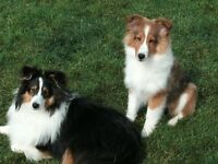 Doggie Daycare! Small Breeds-East of Yonge off Mapleview