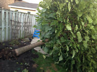 Niagara's Cheapest Leaf/ branch / Yard Waste / branch Removal