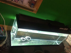50 gallon tank with filter and lights