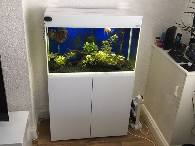 Aquael glossy 80 aquarium 125 litres in hatfield for Aquarium 80 litres