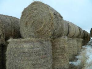 Alfalfa Grass Hay Round Bales