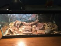 TERRARIUM FOR SALE ANY OFFER YOU'LL PROBABLY GET IT!