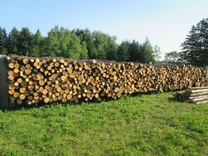 500-pieces-cedar-posts-8ft-good-for-build-antique-fence