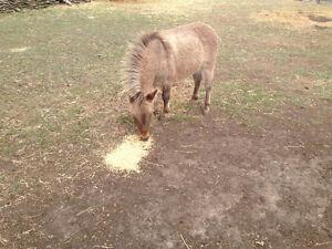 Livestock Guardian Mini Mule ... Tough and agressive