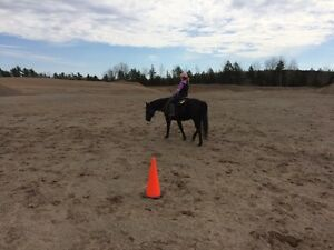 Beginner Horsemanship Lessons in Cooks Brook