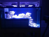 Custom salt water or fresh water aquariums