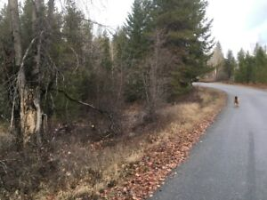 1.44 acres Krestova  Land for sale