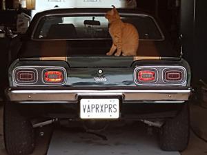 V 8 Chevy Vega