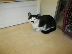 H.A.R.T.  -   POLLY IS LOOKING FOR SOMEONE TO LOVE.
