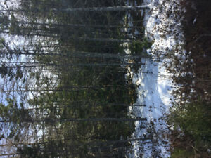 1.5 acre lot for sale in Oyster Pond