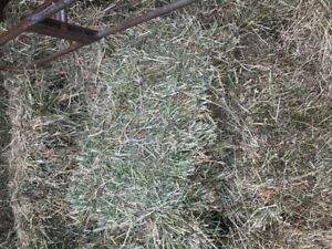 Hay for sale Alfalfa / Timothy / brome 4000.00 bales 9 299-2359